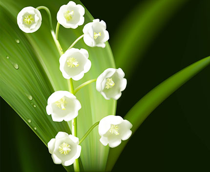 Lily Of The Valley Dangerously Beautiful Michigan Bulb Blog