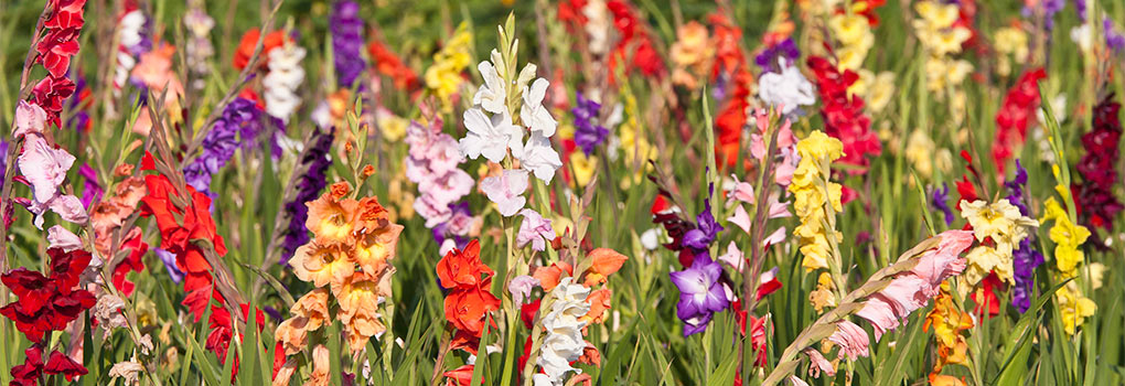 Storing Summer Bulbs In The Winter